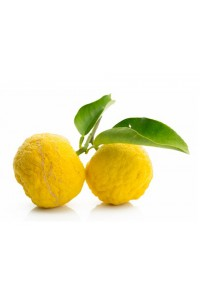 Fresh Kito yuzu 1 piece (starting 17/11)